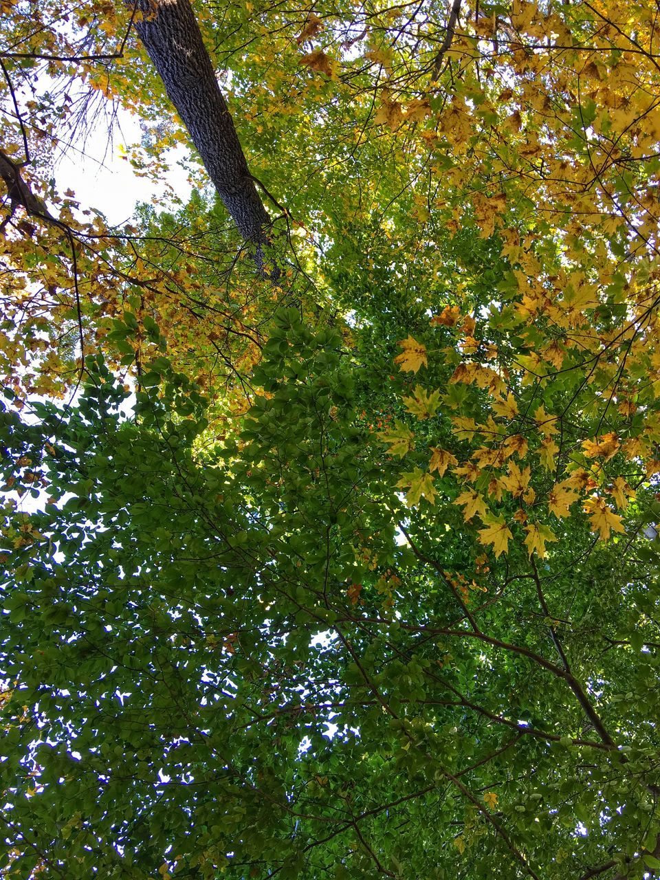 tree, nature, growth, low angle view, beauty in nature, leaf, branch, forest, day, green color, outdoors, autumn, no people, tranquility, scenics, freshness