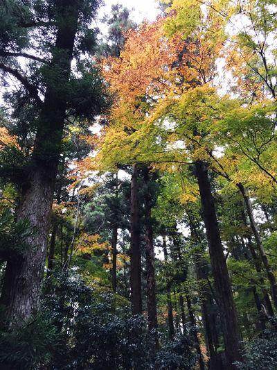 美しい森。 TktkTokyo 紅葉狩り