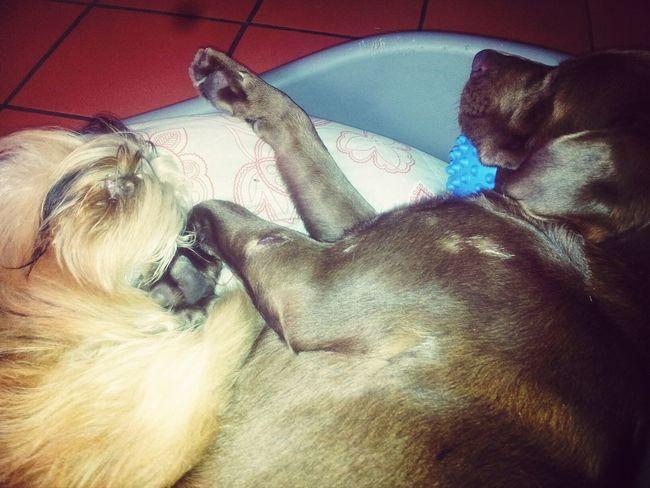 Bubi Nanne E Coccole Cucciolini♥ I Love My Dog
