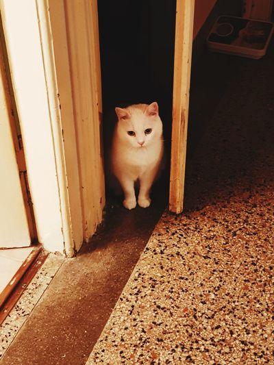 Portrait of cat sitting on door