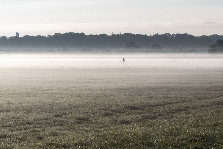 Fog in the morning and a biker Fog Environment Landscape Land Field Plant Beauty In Nature Tranquility Nature Tranquil Scene Grass Scenics - Nature Sky Day Animal Themes Non-urban Scene One Animal Tree Animal Outdoors Hazy