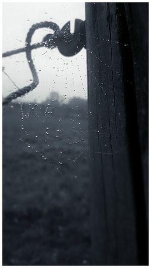 Water Drop Spider Web Rainy Season No People Blackandwhite Nature RainDrop Wet Rain Black And White Photography Black And White Collection  Nature Relaxing