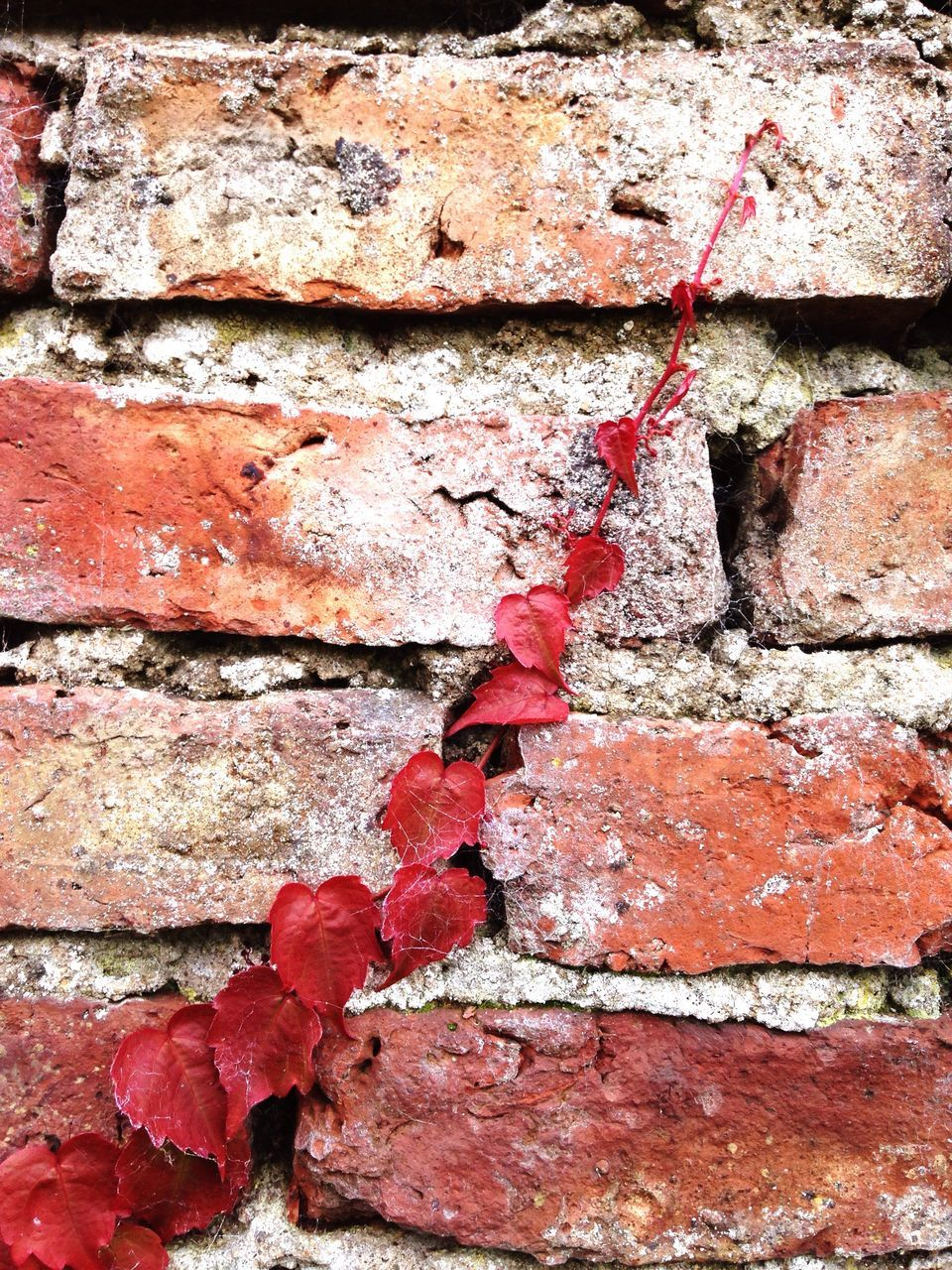 built structure, red, wall - building feature, brick wall, architecture, weathered, backgrounds, outdoors, textured, paint, building exterior, day, close-up, no people