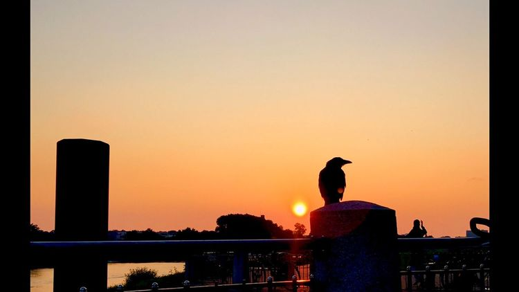 Sun Sky Orange Beatifull Red Raven Love Bremen Germany First Eyeem Photo
