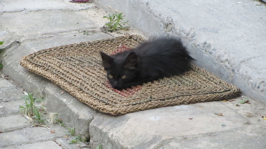 Cyprus Cyprus Cat Nikosia Animal Themes Day Domestic Animals Domestic Cat Feline High Angle View Mammal Nature No People One Animal Outdoors Pets