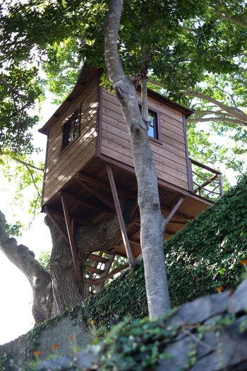 House Tree House