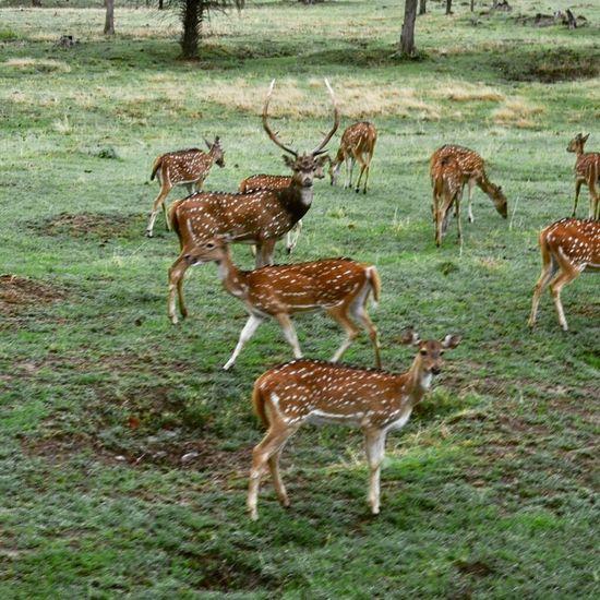 Deer Animals In