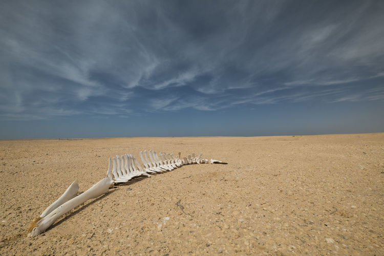 dead dolphin in arid landscape with dramatic sky above Aridity Climate Change Dead Death Fishing Industry Dry Landscape Dolphin Fish Sky Cloud - Sky Land Sand Nature Scenics - Nature Beauty In Nature Beach Tranquility Tranquil Scene Horizon Landscape Day Environment Non-urban Scene No People Horizon Over Land Desert Water Climate Arid Climate Salt Flat