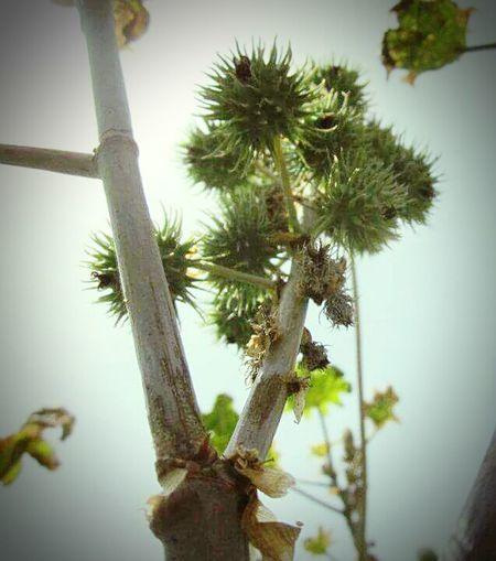 Eyemnaturelover Green Sky Viewfrombottomofplant NatureAtItsBest Showcase: November Check This Out Learn & Shoot: Simplicity