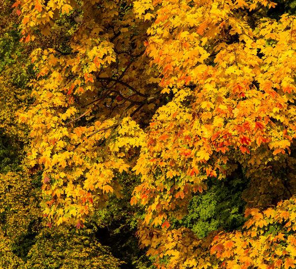 Full frame shot of yellow flowering plants during autumn
