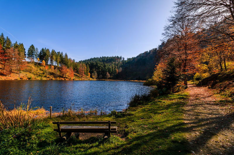 Nonnenmattweiher im Herbst Schwarzwald Autumn Beauty In Nature Black Forest Change Clear Sky Day Grass Lake Landscape Leaf Mountain Nature No People Outdoors Scenics Sky Tranquil Scene Tranquility Tree Water My Best Photo