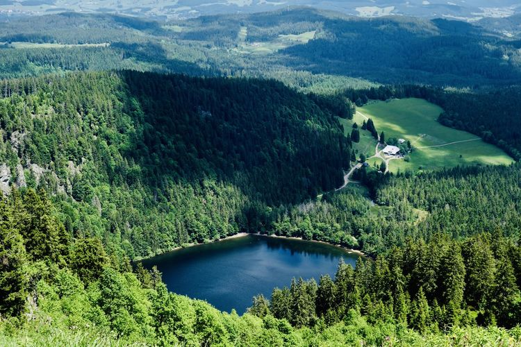Black forest rural scene with lake and woods on a sunny day. Landscape Background Texture Background Black Forrest Black Forest Germany Nature Lake Trees Forrest Sunny Day Tree Plant Scenics - Nature Beauty In Nature Water Green Color Tranquil Scene Mountain Environment Tranquility High Angle View Nature Non-urban Scene Forest Land Day Growth Foliage Landscape No People