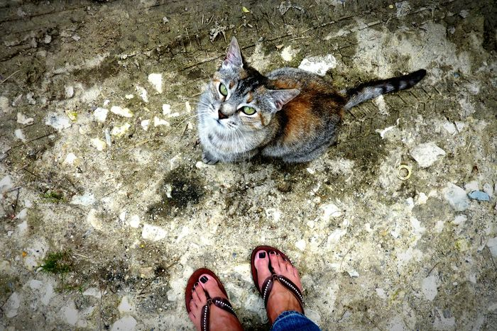 Green Eyed Cat Look At Me In The Eyes  Cat Eyes Curious Cat Feet Streetphotography Street Cat Waiting For A Friend Cuddle With The Cat Cat Watching Cateyes Cats Of EyeEm