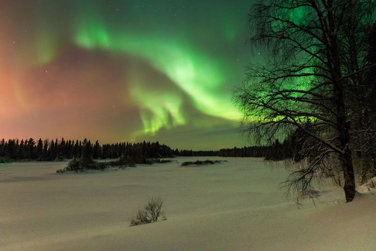 Lights over the river Tree Beauty In Nature Sky Snow Cold Temperature Winter Tranquility Night Landscape Nature Land No People Scenics - Nature Tranquil Scene Cloud - Sky Outdoors River Northern Lights Green Color Forest North Freshness Scenics View Travel