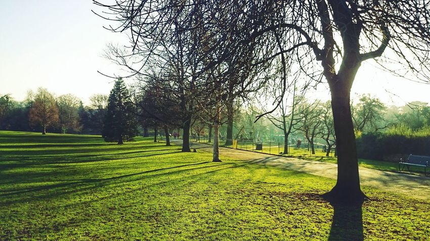 Sunny afternoon Tree Nature Growth No People Beauty In Nature Grass Tranquility Outdoors Sky Tranquil Scene Scenics Landscape Day Lush - Description First Eyeem Photo Idyllic
