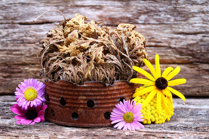 Beauty In Nature Botany Close-up Day Flower Flower Head Focus On Foreground Fragility Freshness Growth Nature No People Outdoors Petal Pier Rose Of Jericho Tranquility Wood - Material Wüstenrose Yellow