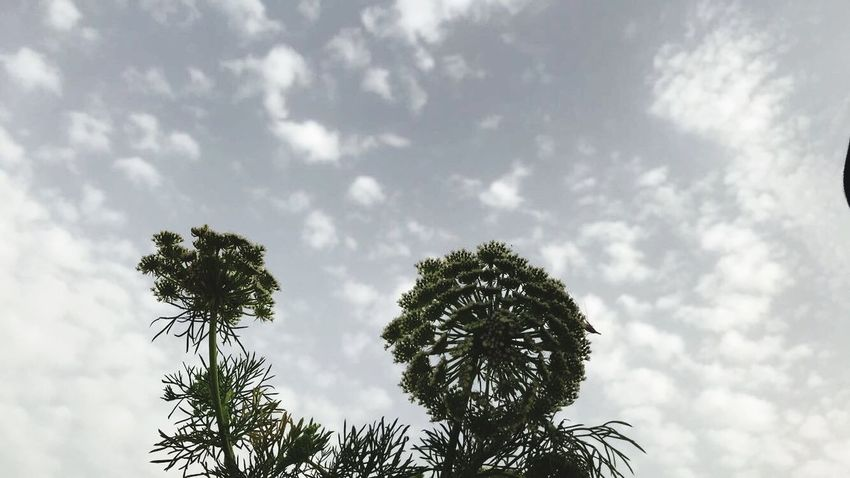 EyeEm Nature Lover Summer Summer Exploratorium Nature Bestoftheday Lovely EyeEm Best Shots 4K Sky Cloud - Sky Low Angle View Tree Plant Growth No People Nature Day Treetop Branch Beauty In Nature Silhouette Outdoors Tropical Climate Tranquility Palm Tree Sunlight Scenics - Nature