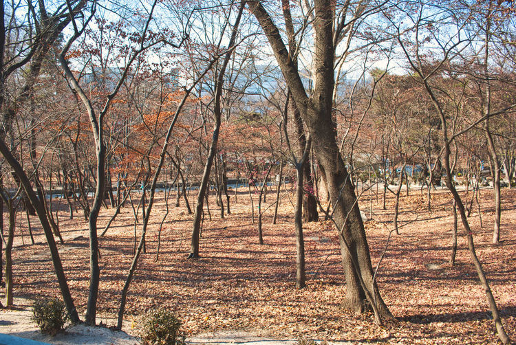 vintage photography style, beautiful scenery at public park during winter time Tree Plant Land Bare Tree Tranquility Nature Tree Trunk No People Trunk Autumn Day Landscape Forest Tranquil Scene Field Beauty In Nature Scenics - Nature Outdoors Environment Non-urban Scene Change