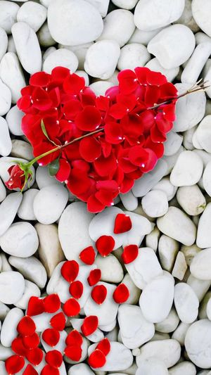 Roses,Hearts, Red Love Flower Petal Heart Shape Rose - Flower Valentine's Day - Holiday Rose Petals Beauty In Nature Flower Head