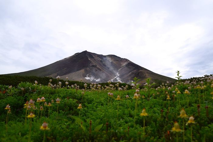 Wild flowers in bloom at the feet of Mount Asahidake during short summer season in Daisetsuzan National Park, Hokkaido, Japan. Flower Rural Scene Field Outdoors Beauty In Nature Nature Cloud - Sky Landscape Day Growth No People Mountain Sky Freshness Blooming Wild Flowers Meadow Fragility Summer National Park Hokkaido,Japan The Week On EyeEm