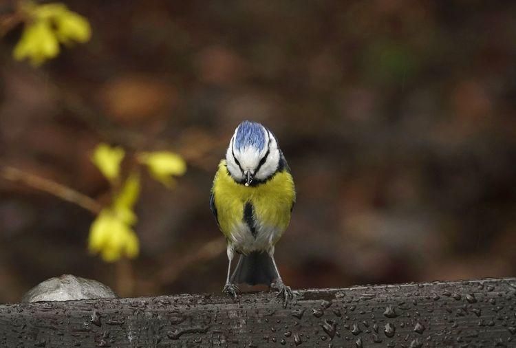 Close-up of bird perching on wet wood