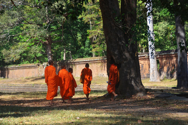Monks, Siem Reap Cambodia Adult Day Growth Men Nature Outdoors People Real People Religion Tree