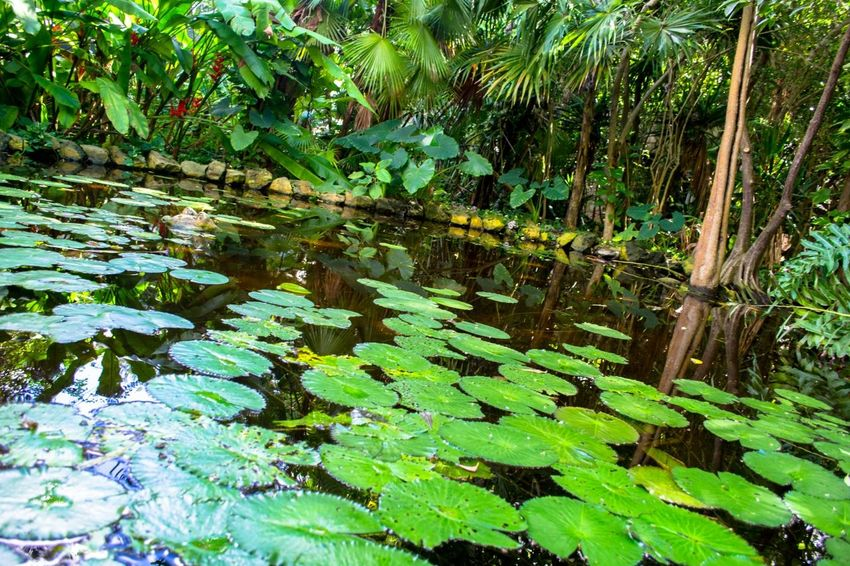 Green Nature in Mexico Attraction In Mexico Authentic Mexican Food Friendlylocalguides Holidays Mexico National Landmark Park Pyramid Things To Do Vacation What To See In Mexico Where To Go Xcaret