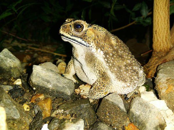 Frog King , Froggy Style , Frog Eyes , Frogskins , Eyeem Edits Photo