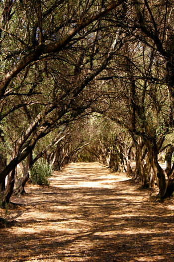 A cool shaded pathway through the trees Avenue Of Trees Arching Trees Beauty In Nature Branch Country Lane Dappled Light Day Landscape Nature No People Outdoors Rural Scene Scenics Shaded Lane Shadow Sunlight The Way Forward Tranquil Scene Tree Walkway
