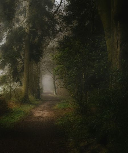 Foggy forest path in the morning Tree Nature Backgrounds Forest Beauty In Nature Day Outdoors EyeEm Magazine Landscape Nature No People Forest Photography Forest Path Forest Walk Misty Morning Foggy Fog Mistic