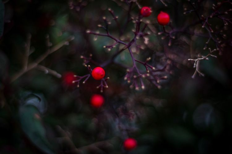 Floral Winter Beauty Red Fruit Tree Plant Close-up Focus On Foreground Freshness No People Berry Fruit Growth Beauty In Nature Nature Outdoors Day Branch