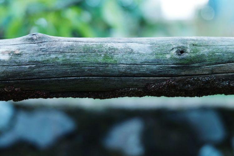 Tree Reptile Wood - Material Close-up Ant