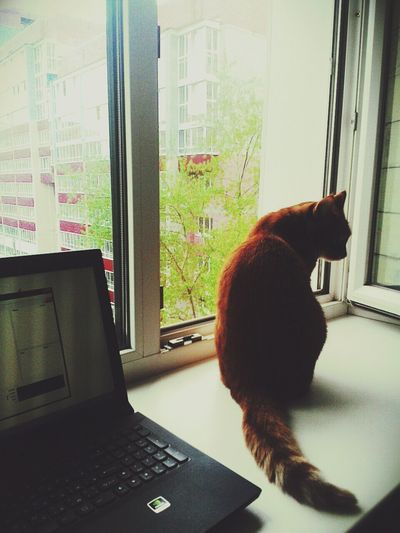 ♥ Colors Preety My Life Color My Cat After The Rain Lovely Live Is Beautiful