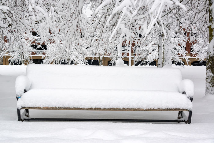 Bench on the waterfront covered in snow in Portland, Oregon Architecture Bench City Downtown Ice Oregon Pacific Portland Portland, OR Riverside Tree Trees Willamette River  Winter Benches Cold Colorful Infrastructure Northwest Park River Snow Urban Waterfront White