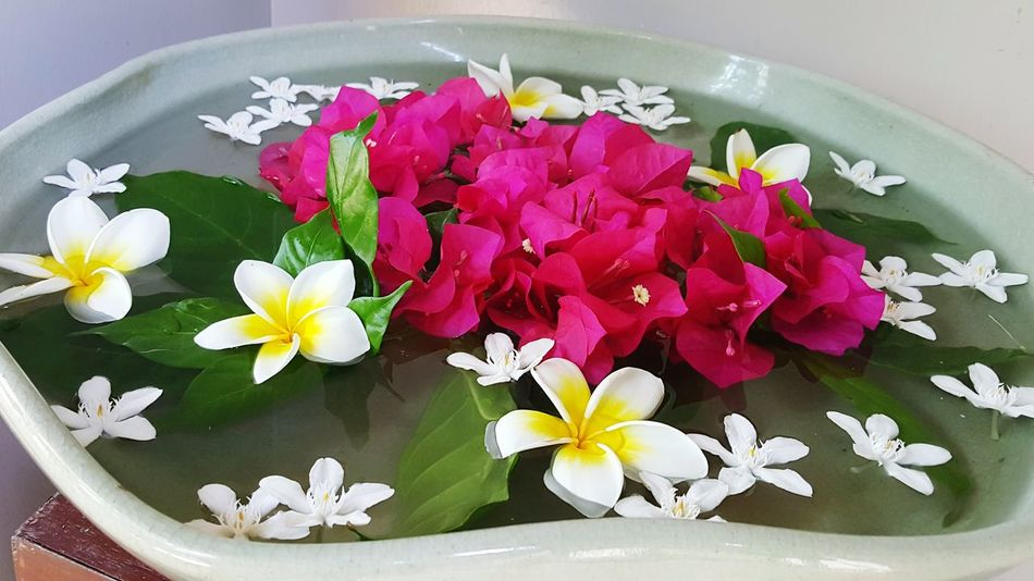 Flower Petal Orchid Multi Colored Water Freshness Flower Head No People Nature Day