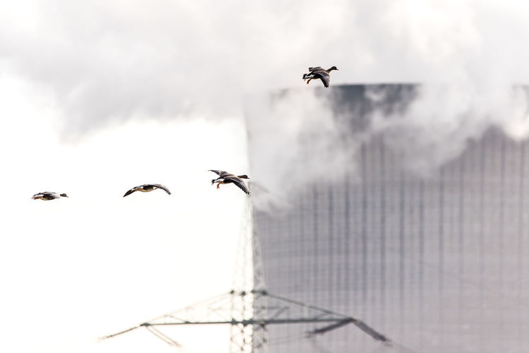 Animal Themes Animal Wildlife Animals In The Wild Bird Cooling Towers Day Flying Geese Geese In Flight Industrie Und Natur Industry Low Angle View Mid-air Nature No People Outdoors Sky Spread Wings EyeEmNewHere The Great Outdoors - 2017 EyeEm Awards The Photojournalist - 2017 EyeEm Awards
