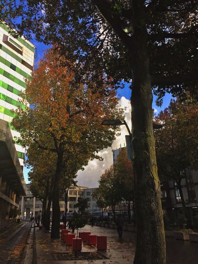Tree Autumn Outdoors Growth Day Tree Trunk Leaf Nature Built Structure Architecture Building Exterior Branch Beauty In Nature City Sky