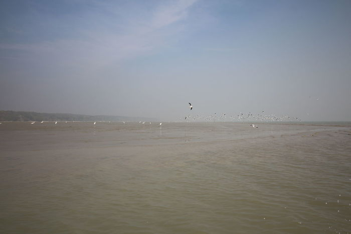 Seagulls and Herons flying in Char Kukre Mukre Bangladesh Beauty In Nature Bird Flying Heron Bird Landscape Scenics Sea Seagulls Sky Tranquility Water