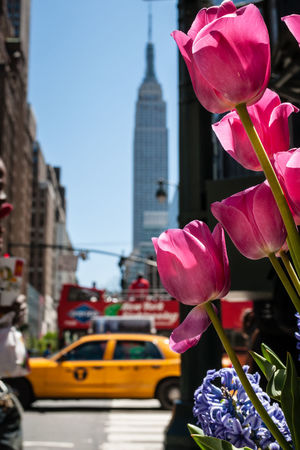 Architecture City Day Empire State Building Flower Flowers Manhattan New York New York City NYC Petal Pink Color Sky Spring Spring Flowers Springtime Street Street Photography Streetphotography Taxi Tulips Tulips🌷 Urban Urban Spring Fever