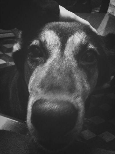 Pets I Love My Dog