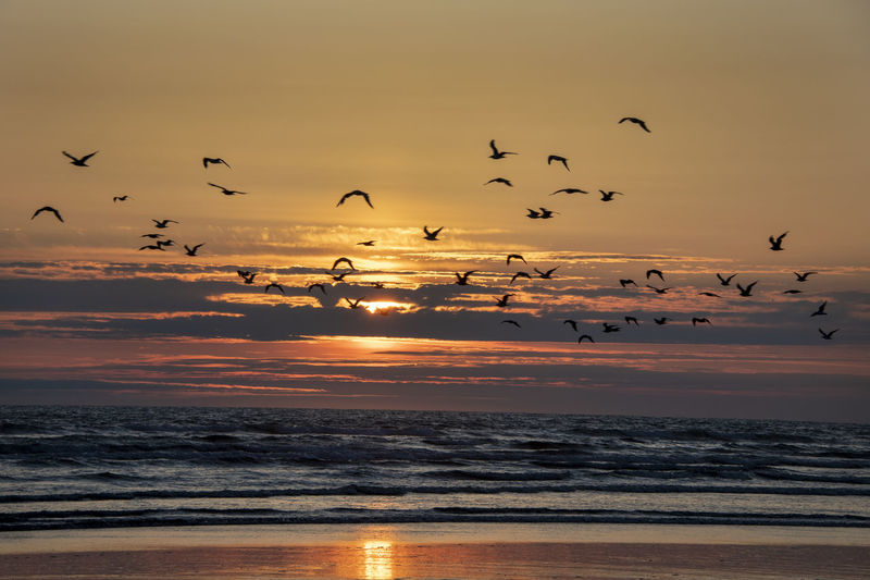 Flock of birds flying over sea at sunset