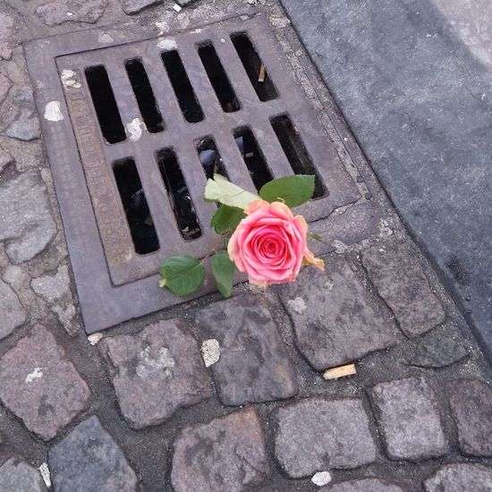 Love Divorce Break Up No Love Break Valentine's Day  High Angle View Sewer Flower Rose - Flower Manhole  Street Day Outdoors Sewage Petal Directly Above Red No People Gutter Nature Flower Head