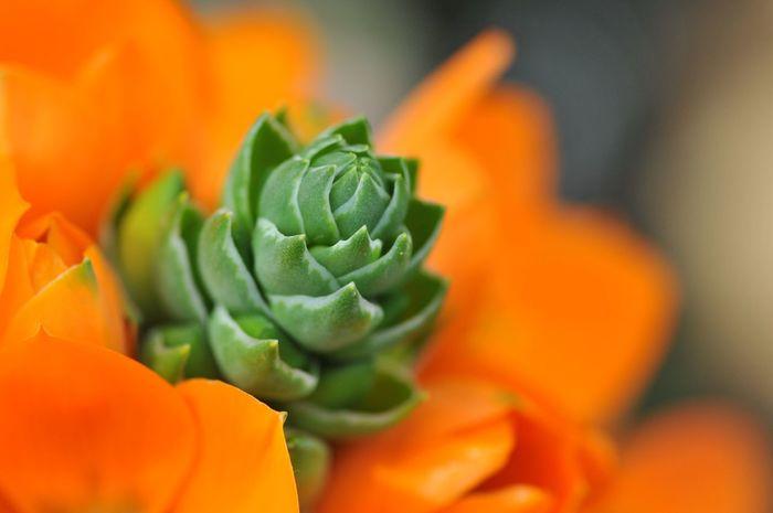 Orange Color Flower Freshness Close-up No People Petal Leaf Fragility Green Color Beauty In Nature Flower Head Food Indoors  Nature Day
