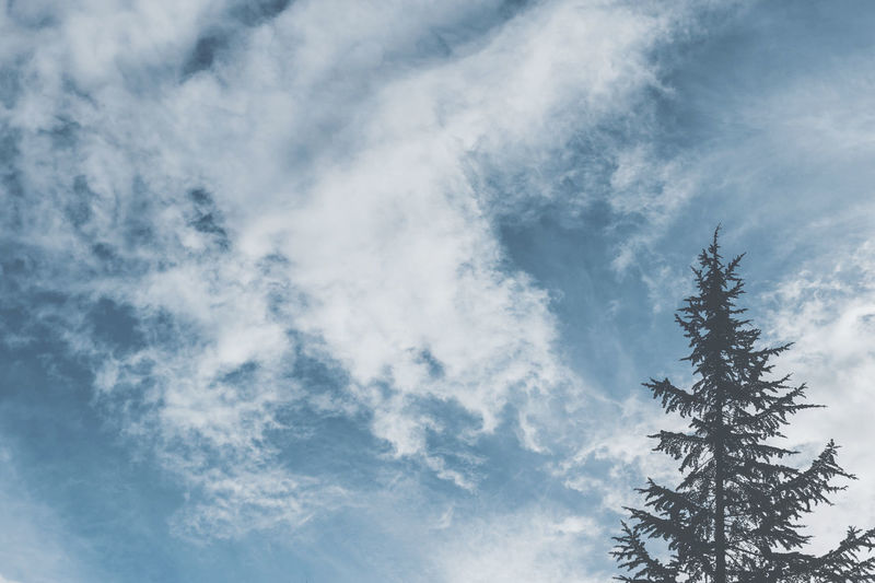 Nature Shades Of Winter Beauty In Nature Blue Cloud - Sky Day Low Angle View Nature No People Outdoors Scenics Sky Tranquil Scene Tranquility Tree Wild Wildlife EyeEmNewHere