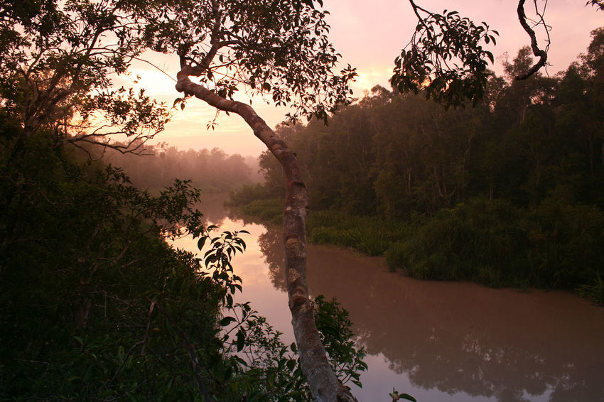 Twilight in the morning mist by a river in the jungle of Kalimatan in Indonesia INDONESIA National Park Twilight Beauty In Nature Branch Environmental Conservation Forest Growth Jungle Kalimatan Lake Misty Morning Nature No People Non-urban Scene Outdoors Plant Reflection Rugged Landscape Scenics - Nature Sky Sunset Tranquil Scene Tranquility Tree Water