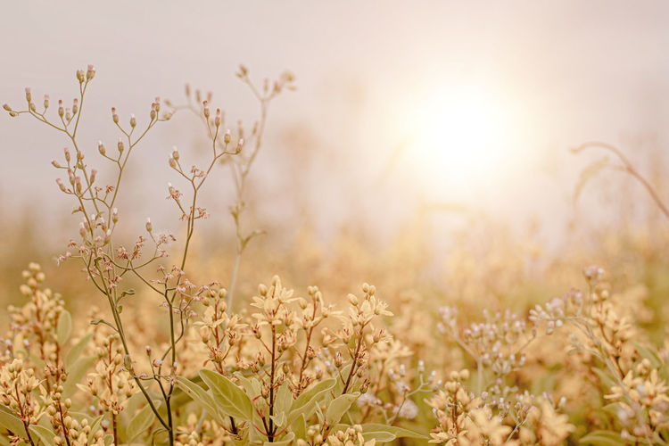 Close-up of plants growing on field against bright sun