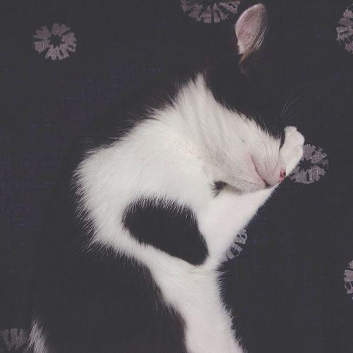 おやすみ 雨ちゃん 子猫ちゃん ハチワレ