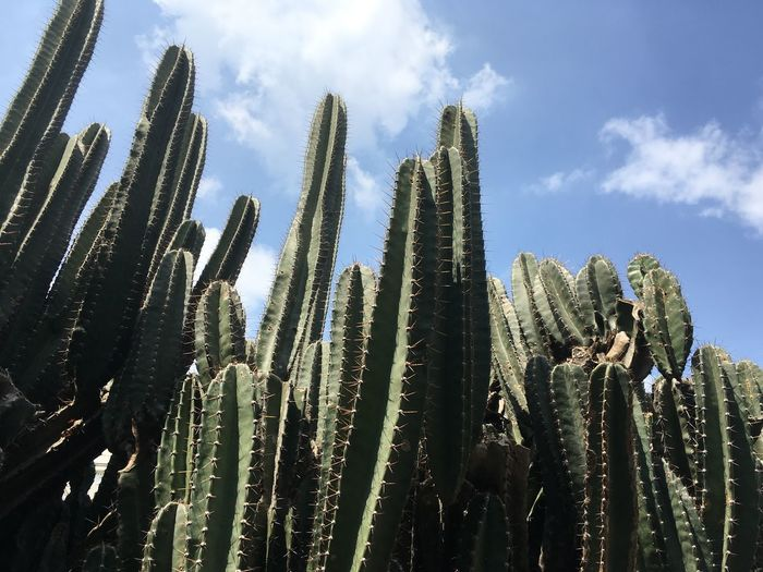 Plant Growth Sky Low Angle View Cloud - Sky Cactus Succulent Plant Beauty In Nature Tranquility Sunlight