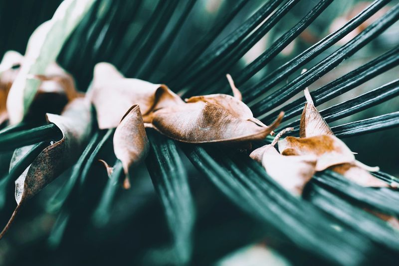 Animal Themes Animal One Animal Close-up No People Selective Focus Day Leaf Nature Green Color Growth Plant