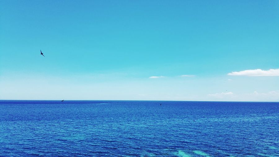 Blues Serenity Sea Horizon Blue Inlove Clear My Sky Everything Is Blue The Waters The Sky My Mood